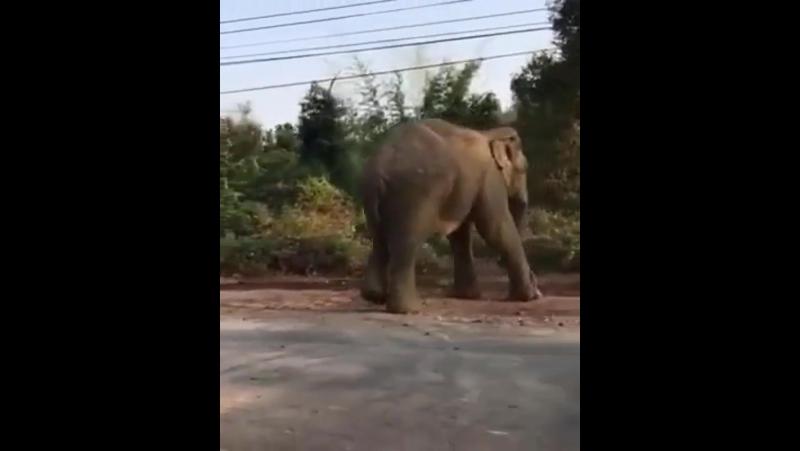 Доброе слоновое утро! К списку мест, в котором можно посмотреть диких слонов добавилась дорога на водопад Пала-У (Pala-U Waterfa