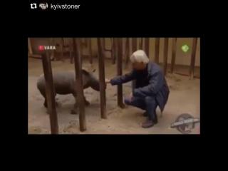 Даже детёныши носорога являются очень опасными существами