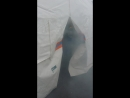 вышел ежик из тумана