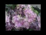 Валерий Агафонов Чудная роза
