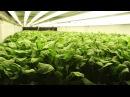Гидропоника | Otrisi - производитель удобрений для аквариумных растений