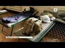9 ЛИСТОПАДА 2016 р. Батальйон Донбас-Україна із окопів – до занедбаної військової частини в тилу