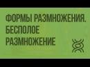 37 10 класс Формы размножения организмов Бесполое размножение
