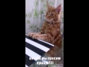 Фокс/Фоксик! просим кушать😉 Большая Киса)еще котенок!)котик просит кушать)