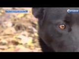 Собака на сломанных лапах прошла 300 километров, чтобы вернуться к хозяйке.