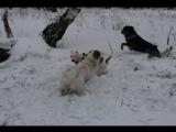 Yello-Прогулка Зима Роща