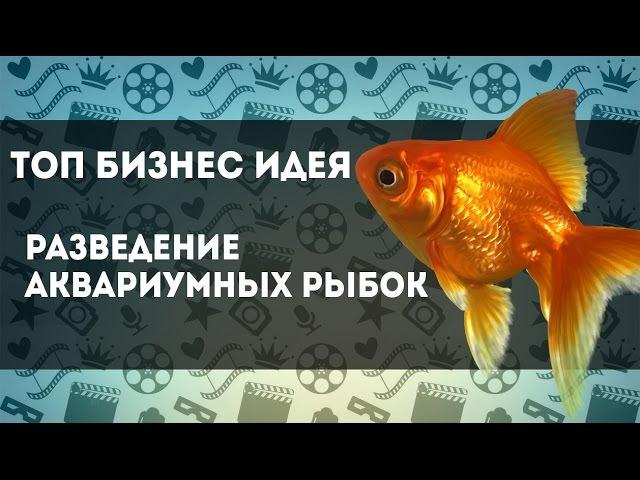 Крутая Топ Бизнес Идея с минимальными вложениями Разведение аквариумных рыбок