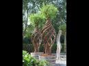 Деревья плетенные из лозы Trees wickerwork 树的柳条制品