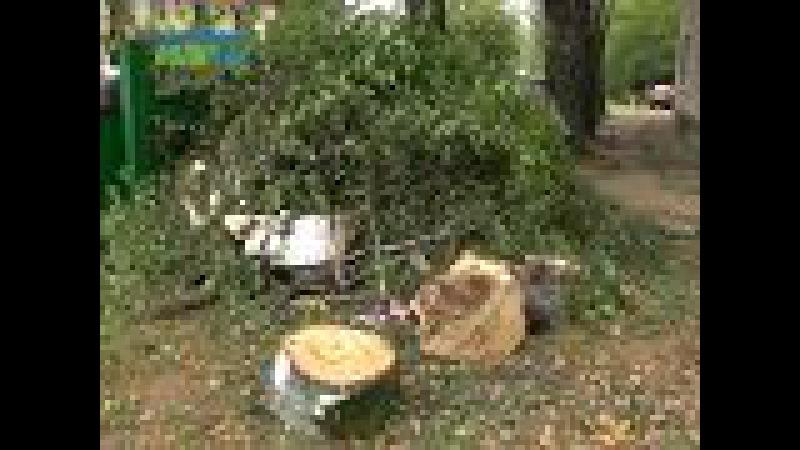В Конаково из-за сильного ветра 20-метровая береза упала на жилой дом