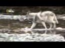 L'Alaska à l'état sauvage 2014 Documentaire Français