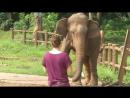 По улицам слонов водили.