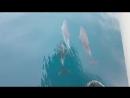 дельфины Черное море.
