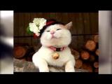 Топ 10 смешных котиков))))