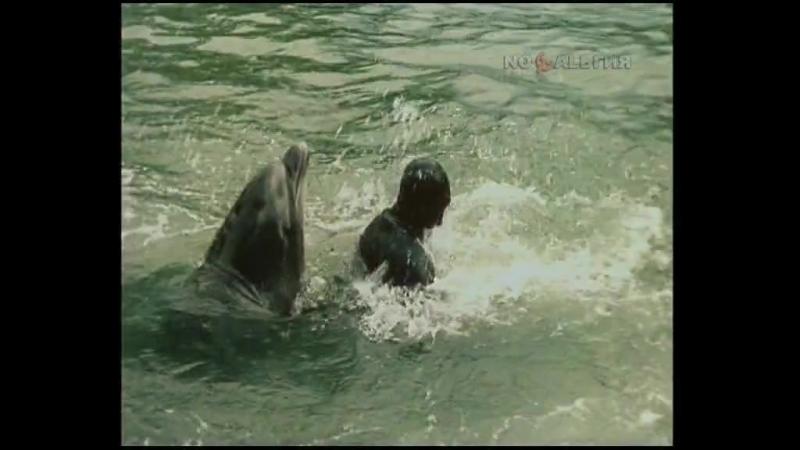 Люди и дельфины (1983. Серия 1)