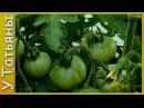 БОРНАЯ КИСЛОТА увеличивает урожайность томатов, земляники, картофеля, свеклы и других растений.