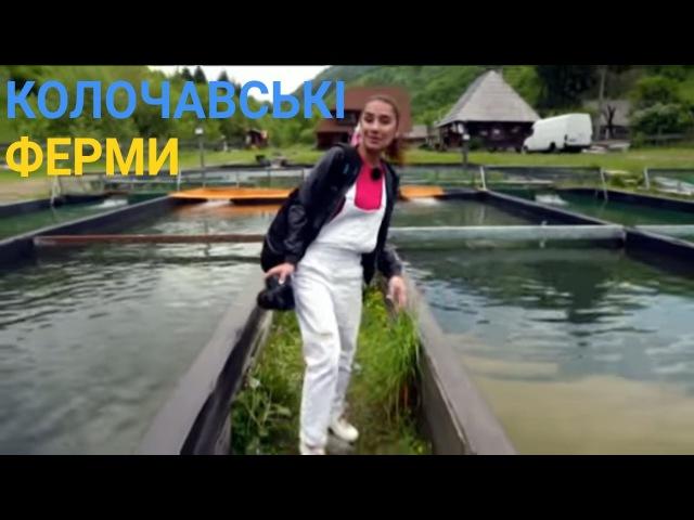 Еко-туризм у Колочаві - Неординарні господарства у Карпатах | Україна вражає