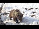 Медвежонок Мансур скучает по пилоту Андрею Иванову.