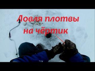 ловля плотвы в белоруссии
