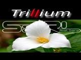 Trillium - S3RL feat Sara