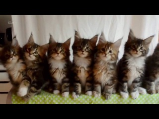 ITV The Story Of Cats 2 of 3 Cute Response