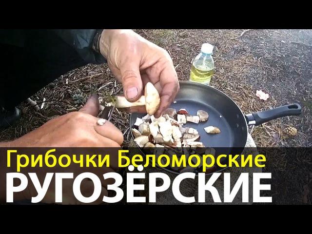 Грибочки Беломорские Ругозёрские | Беломорские приключения 2016 | Приключения на байдарке