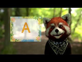 Учим буквы алфавита с енотом Тимой  буква А