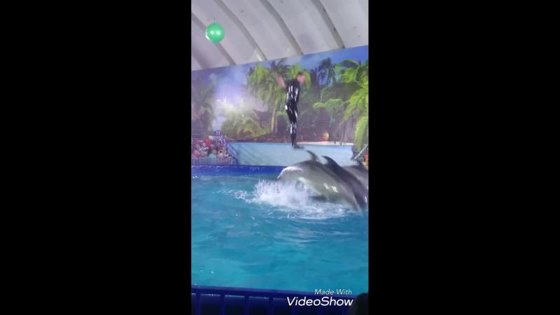 Delphiny v Mongolii