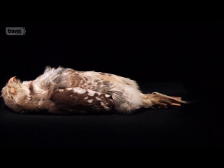 Музейные Тайны 8 сезон 04_Forgotten Lindbergh_Fordlandia_Forest Owlet Fraud