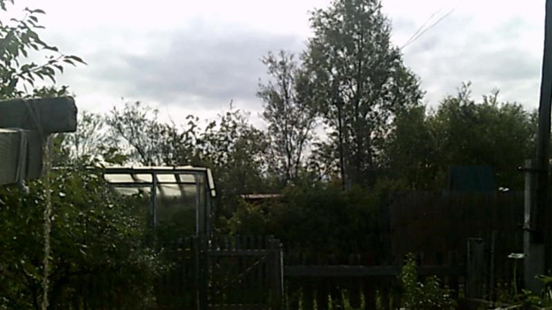 дрозды расплодились