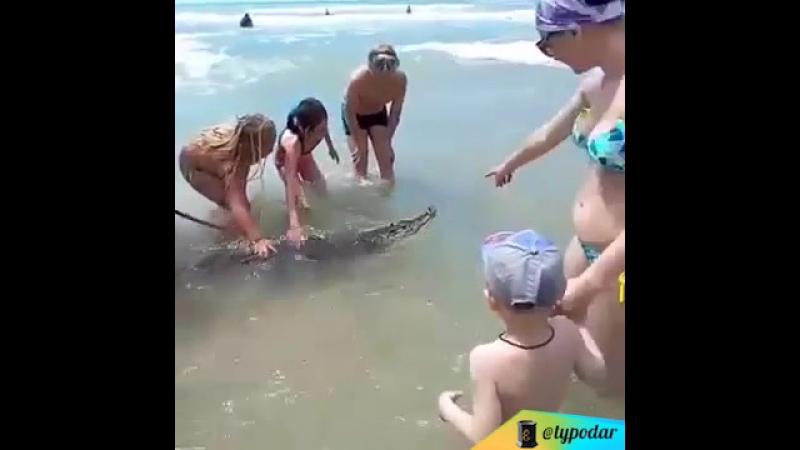 Крокодил-дил-дил плывёт
