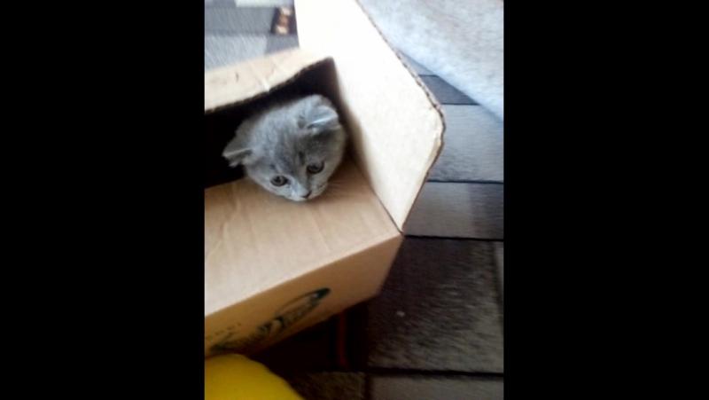 бабушкин кот Томас