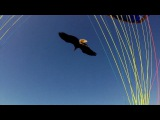 Magic paragliding tandem ride with a falconer and his bald eagle (Go Pro HD)