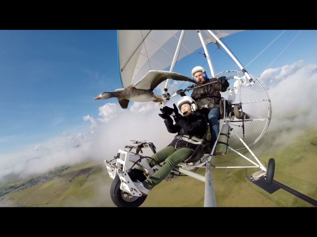 Vol en ULM avec les oies et Christian Moullec. Fly with birds, geese, on board a microlight.
