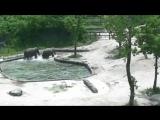 В зоопарке Сеула слоны спасли тонущего детеныша
