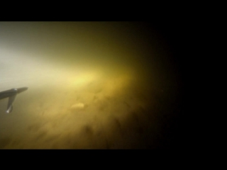 Подводная охота на Оке