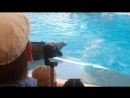 Анапский дельфинарий Танец дельфина