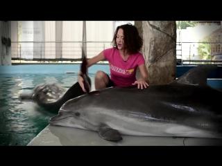Дельфин афалина секс, драгс, рок-н-ролл Все как у зверей №35 (1080p)