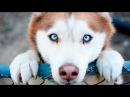 Самые преданные собаки в мире! Собаки верные друзья. Топ самых преданных животн ...
