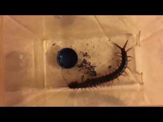 Ржачные приколы тараканы