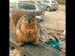 Squirrel Translator