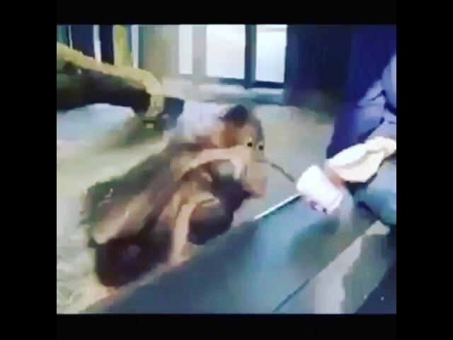 Amro_shehata_fwateh2 video