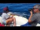 Jugando con Orcas en libertad Península Valdés Patagonia Argentina Playing with killer whales