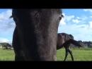 Мой музыкальный клип о лошадях