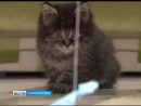 Калининградские библиотекари спасли котенка из трещины в фундаменте