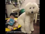 Пудель дружит с ребенком