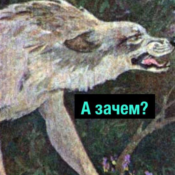 Фото №456245878 со страницы Михаила Кравцова