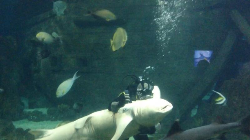 Танец с акулой
