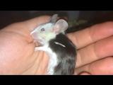 Эпилепсия у мыши