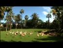 Лоро парк на остр.Тенерифе Канарские острова