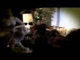 Eartha Kitt – Where Is My Man (Single Mix) (1994)